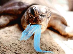 inquinamento sacchetti plastica