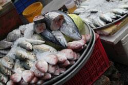pesce-2